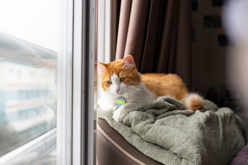 Advantages Of Installing Pet Friendly Window Grill